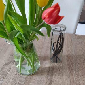 Ab jetzt erhältlich: großes 21cm Zylinderglas zur Aufbewahrung der Vanille